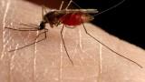 mosquito_634_600x450